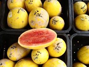 pakwan to, mukhang papaya lang